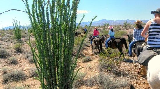 Yucca, AZ: Horseback Riding