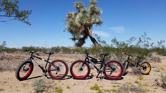 Yucca, Arizona: Fat Tire Mountain Bikes
