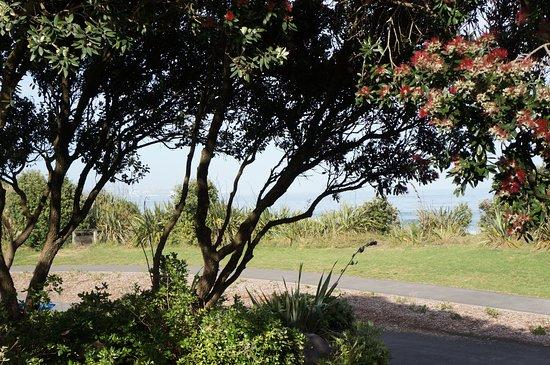 New Plymouth, Nueva Zelanda: Pohutakawa over looking the ocean.