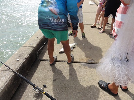 Palm Cove, Avustralya: locals catching barramundi