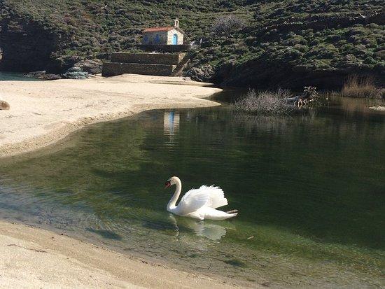 Onar: SWANS ON THE BEACH