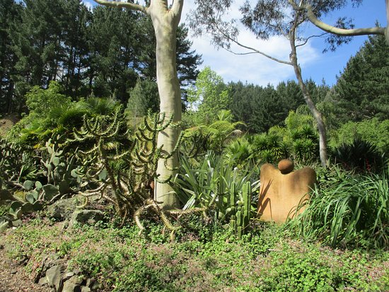 Hamilton, New Zealand: dry cactus garden area