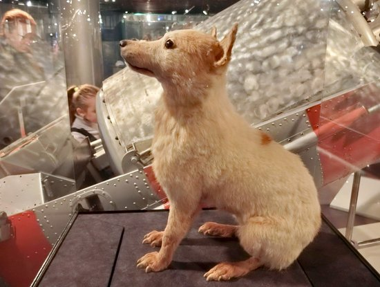 Tripadvisor Space Museum Moscow The Dog That Went To Outer