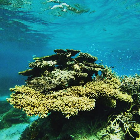 Thulusdhoo Island: Coral reef in Maldives