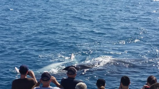 Hervey Bay, Australia: 20161022_145029(0)_large.jpg