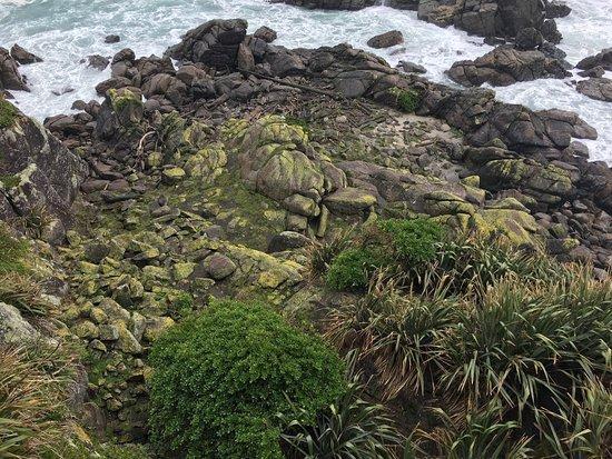 Westport, New Zealand: photo0.jpg