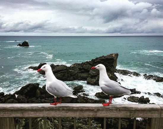 Westport, New Zealand: photo2.jpg