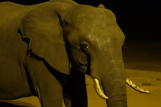 Parque Nacional de Hwange, Zimbabue: watching the elephants at night from the hide