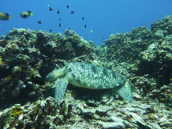 Gili Air, Indonesia: Close encounter with a giant turtle