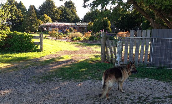 Blueberry B&B: Pearl standing watch at the gates to Blueberry