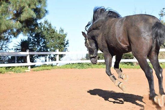Vega de San Mateo, Spanien: Naturaleza y caballos ....