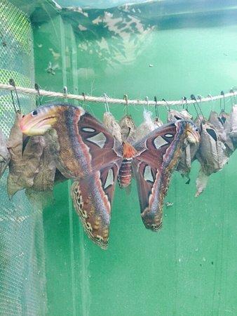 La serre aux papillons la queue les yvelines ce qu 39 il for Attraction yvelines