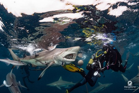 African Dive Tours