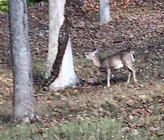 Bilde fra Tygart Lake State Park