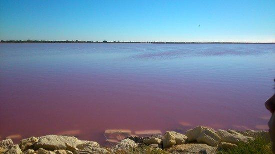 Aigues-Mortes, Francia: Les algues qui donnent la couleur à l'eau des salins!