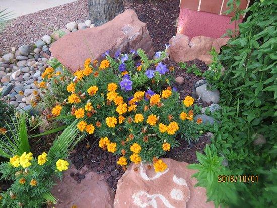 Cottonwood, AZ: Loved the flowers