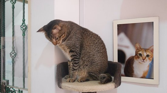 The Cat Museum
