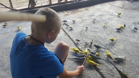 Eagle Rock, มิสซูรี่: Kids enjoyed feeding the parakeets.