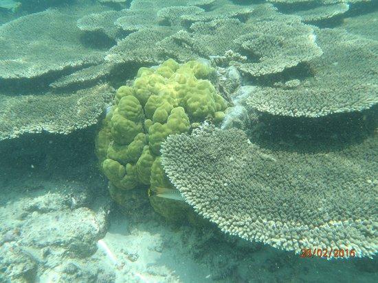 Pointe d'Esny : a cocos isle