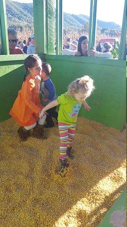 Fender's Farm and Corn Maze: 20161023_170512_large.jpg