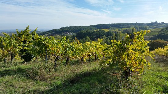 Saussignac, Francia: Surrounded by natural beauty