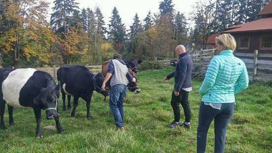 Bainbridge Island, WA: A visit to the dairy and their cows