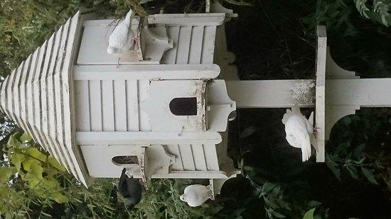 St Austell, UK: Burma bridge and pigeons