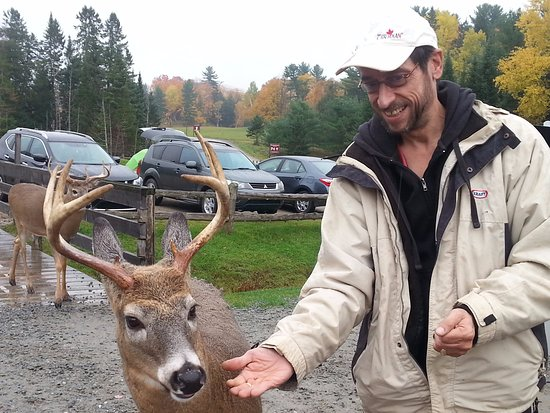 Montebello, Canada: The deer loved being hand fed