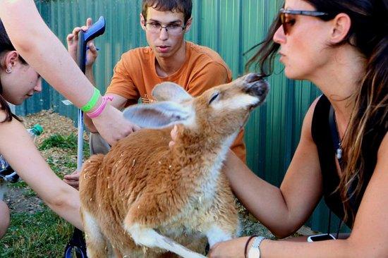 Αν Άρμπορ, Μίσιγκαν: kisses from a kangaroo during a private tour