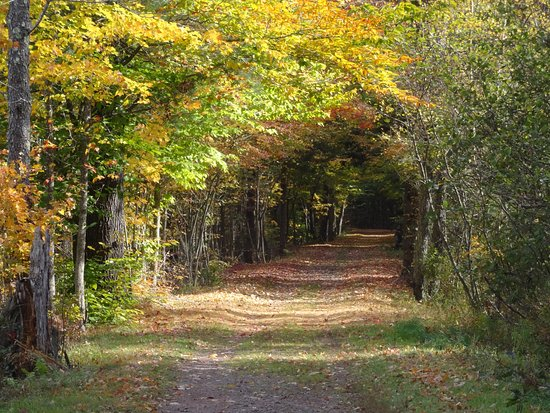 Tannersville, NY: The trail, from the Lake Road side towards Clum Road side
