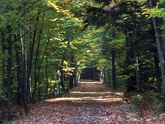 Tannersville, NY: Canopy of trees keeps you shaded