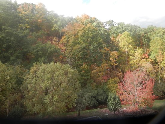 Country Cascades Waterpark Resort: our view of fall trees