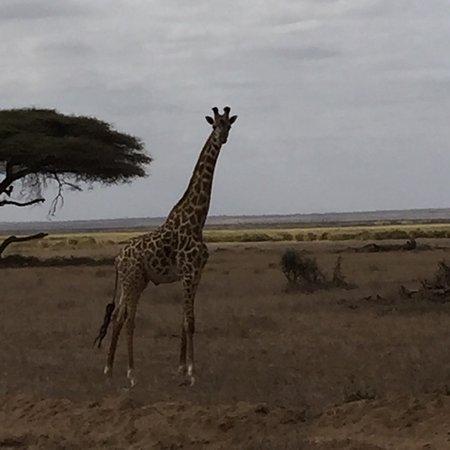 Amboseli Sopa Lodge: photo2.jpg