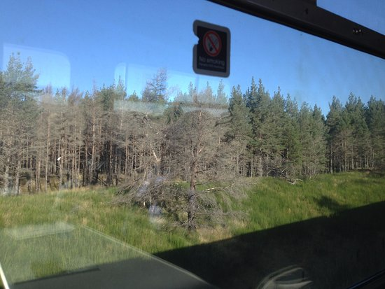 Aviemore, UK: Nice views of the neighbouring forest