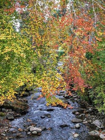 Blair Atholl, UK: Gorgeous trees and stream