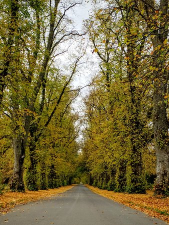 Blair Atholl, UK: The driveway into the castle - gorgeous