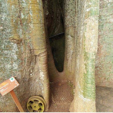 San Cristobal, Ekuador: The hole to the bottom of the tree
