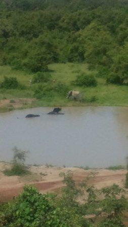 Национальный парк Моле, Гана: Elephants in the water hole
