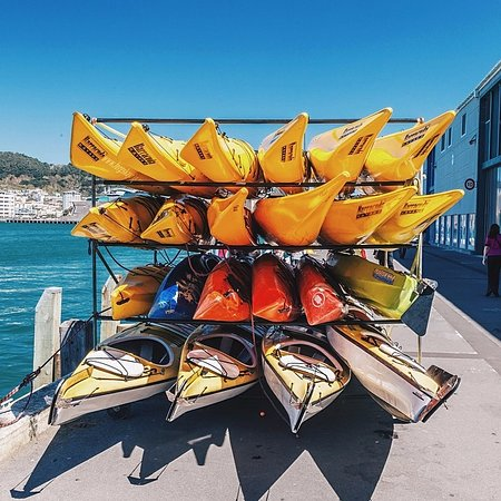 Fergs Kayaks Auckland: A selection of kayaks from our hire fleet