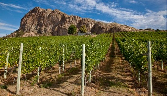 Okanagan Falls, Canadá: Vineyard view of Peach Cliff Bluff.