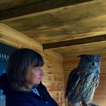 St Columb Major, UK: Owl handling