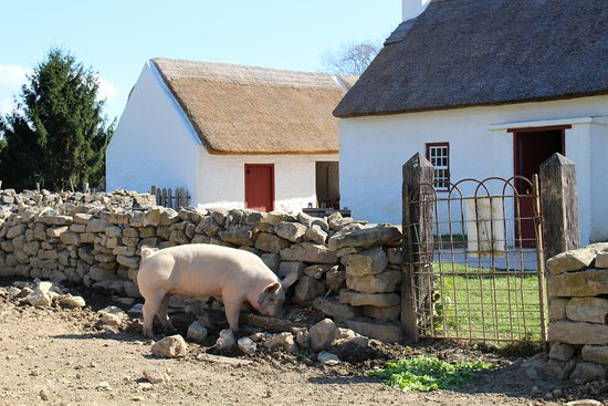 Staunton, VA: Pig by the Irish house