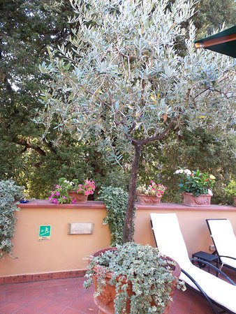 Hotel ilaria 84 1 0 3 updated 2018 prices - Hotels in lucca italy with swimming pool ...