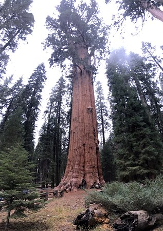 Three Rivers, Kalifornien: Sequoia and Kings Canyon National Parks