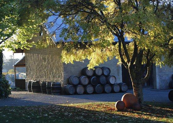 Upper Moutere, Nieuw-Zeeland: Sunlight streaming through the vineyard to the wine bar