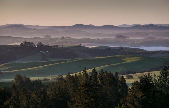 Healdsburg, CA: Pratt Vineyard