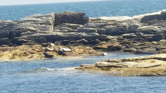 Cap'n Fish's Whale Watch: Seals