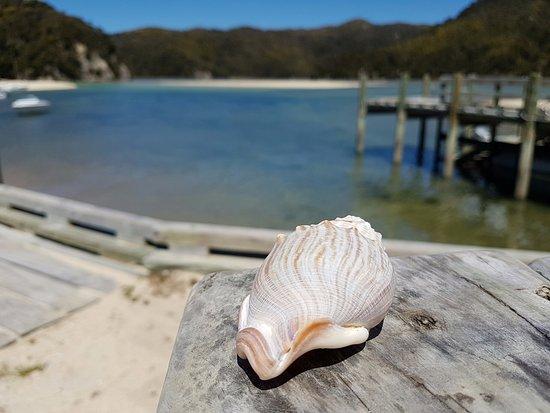 Abel Tasman National Park, Nuova Zelanda: Torrent Bay