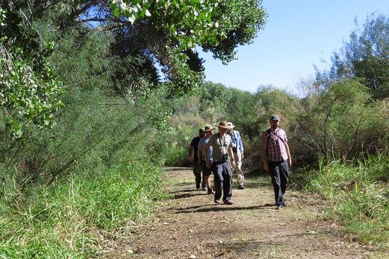 Yuma, AZ: Our birding group along the Cornfield Nature Trail.