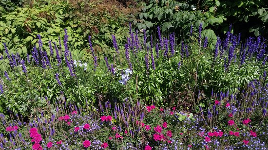 Boothbay, Мэн: Beautiful varieties of flowers